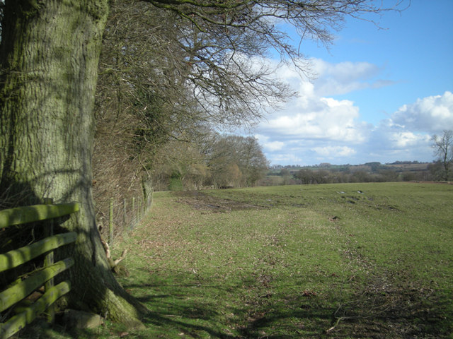 Footpath beside a wood