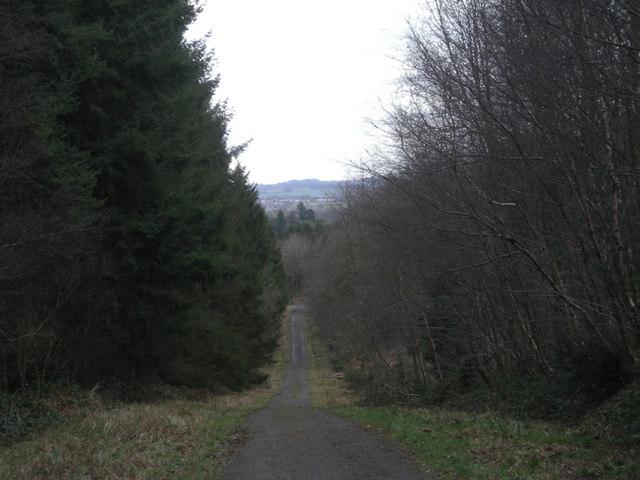 Forestry road through Birchen Park