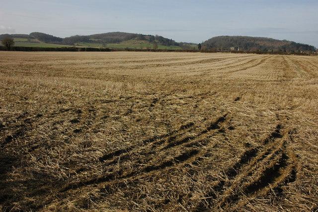 Stubble field at Dumbleton