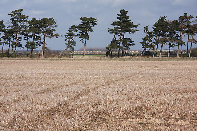 Stubble field and trees, Fordham