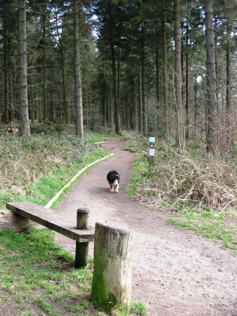 End of the All Ability Trail