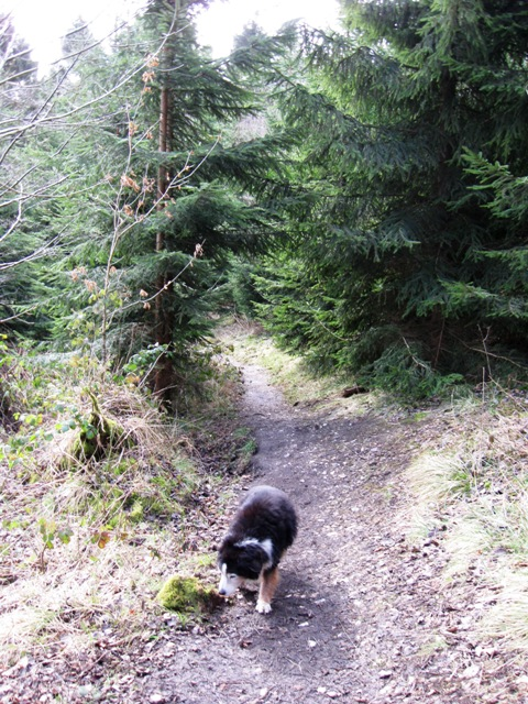 On the Old Firecrest Trail