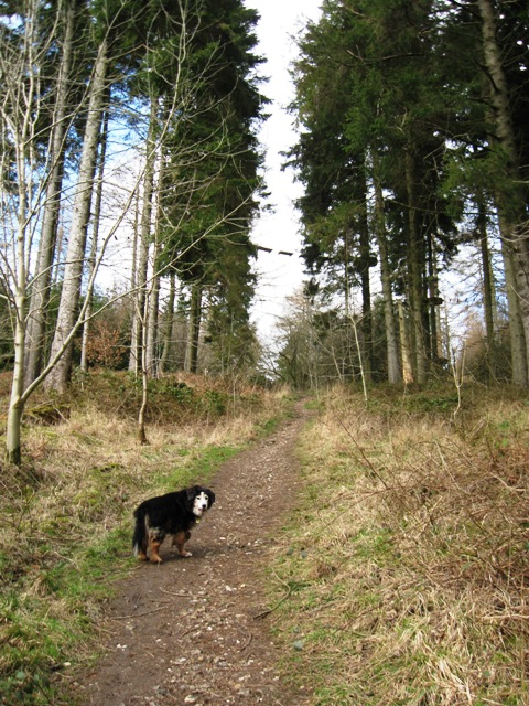 Footpath to Car Park in Wendover Woods