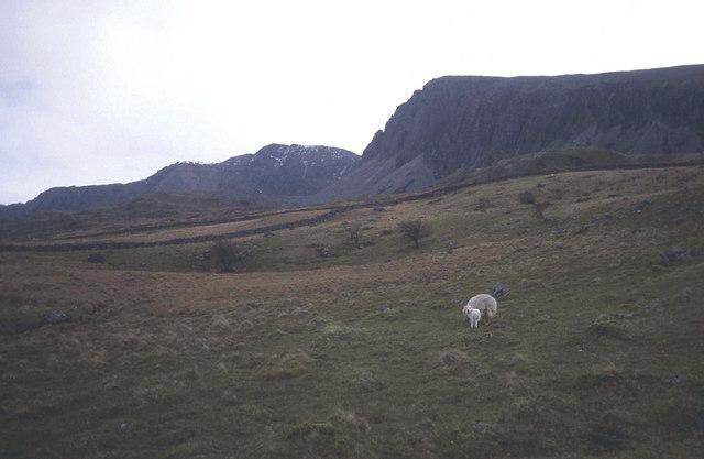 Rough sheep pasture north of Cadair Idris