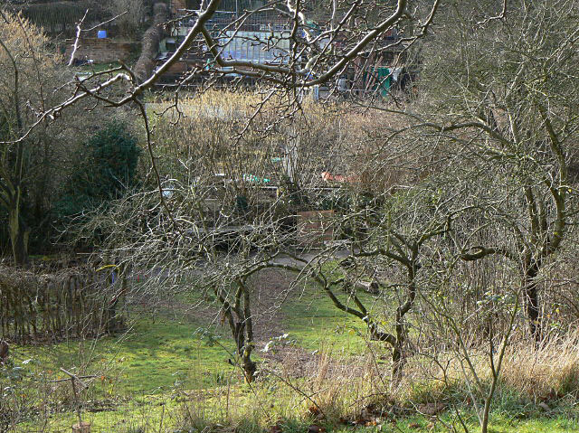 St Ann's Community Orchard