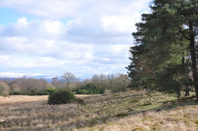 Wood/moorland margin