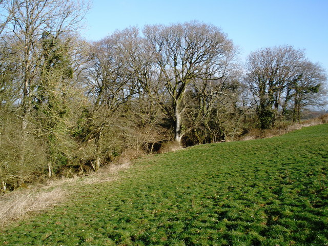 Woodland, near Sutton Farm
