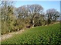 SX2994 : Woodland, near Sutton Farm by Roger Cornfoot