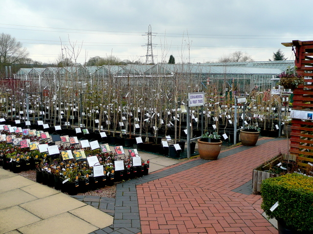 Ashwood Nurseries 5