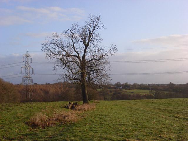 Pastures, Mortimer West End