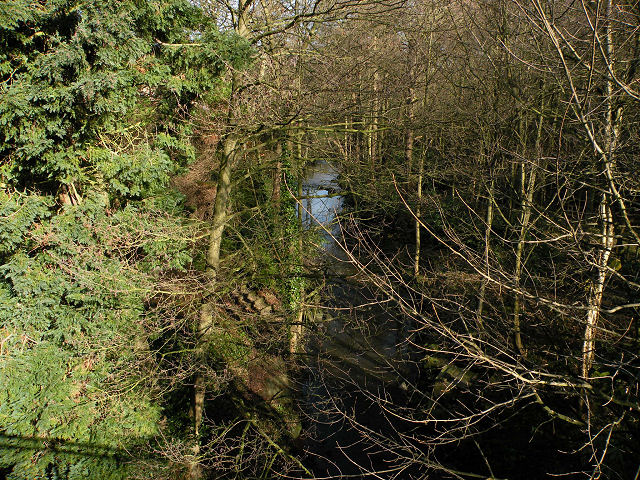 Oak Beck in woods