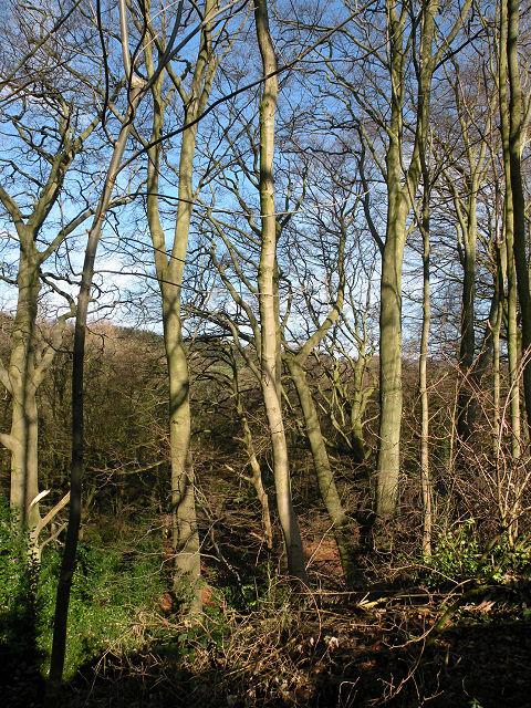 Woods near Oak Beck