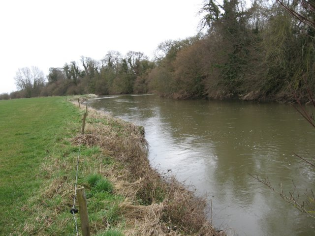 Bank of the Stour near Shapwick