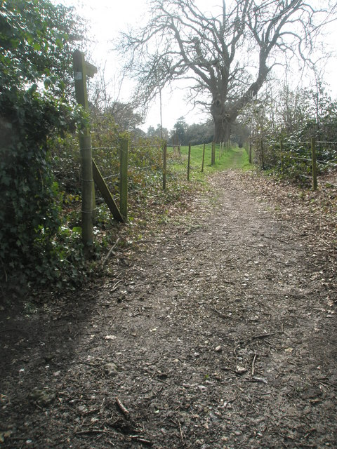 Footpath leading off Blendworth Lane