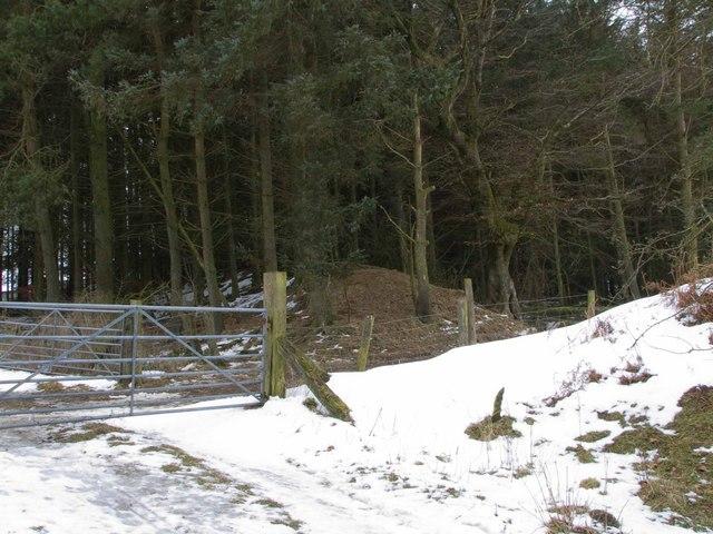 Offa's Dyke at Springhill Farm