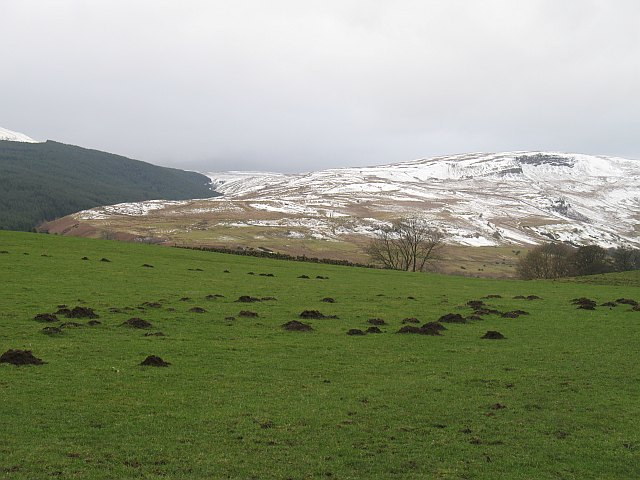 Mole infestation, Spittalhill