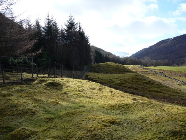 Forest edge in Glen Lyon