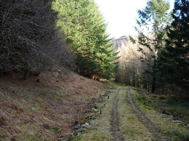 Forest track at Invervar
