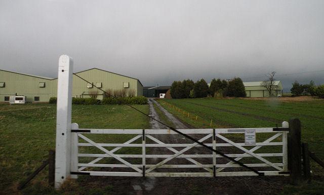 Level crossing gate at Stonea Farm
