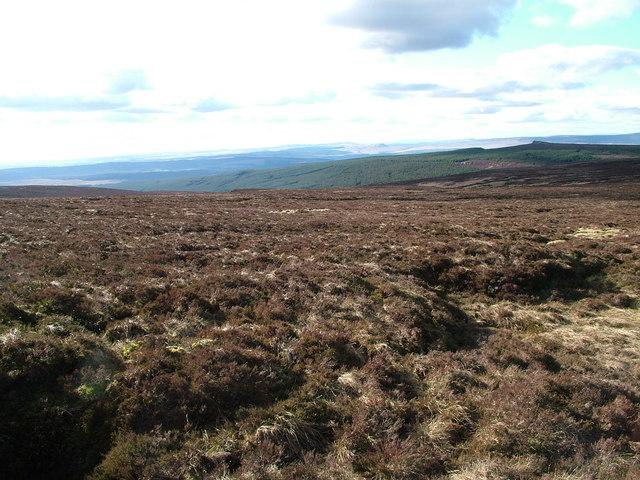 Fellside North West of Sighty Crag