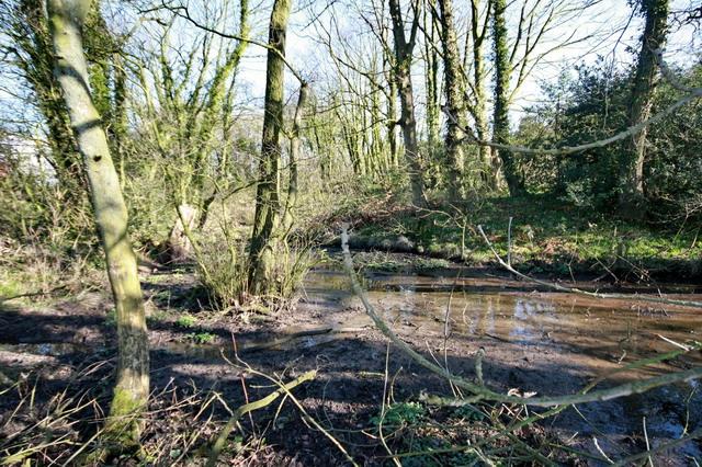 Muddy Pond at Forton