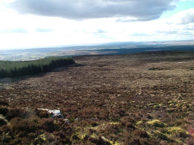 Fellside north of Long Crag