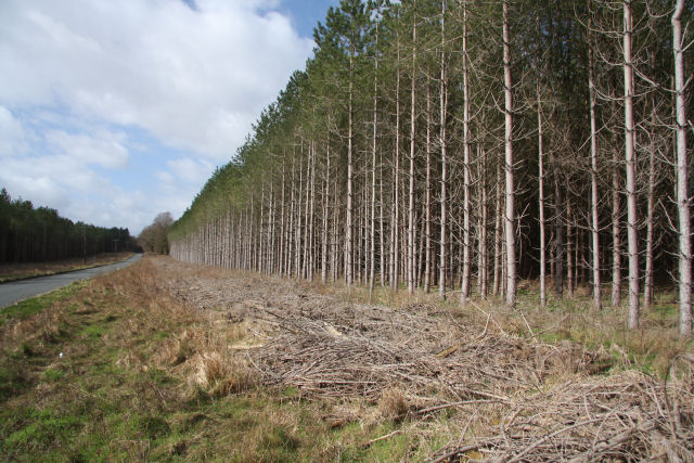 Forest edge near Mildenhall