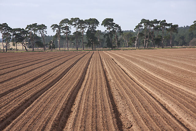 Field next to B1112