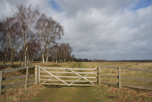 Cavenham Heath National Nature Reserve