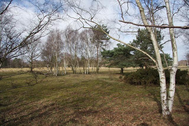 Cavenham Heath National Nature Reserve