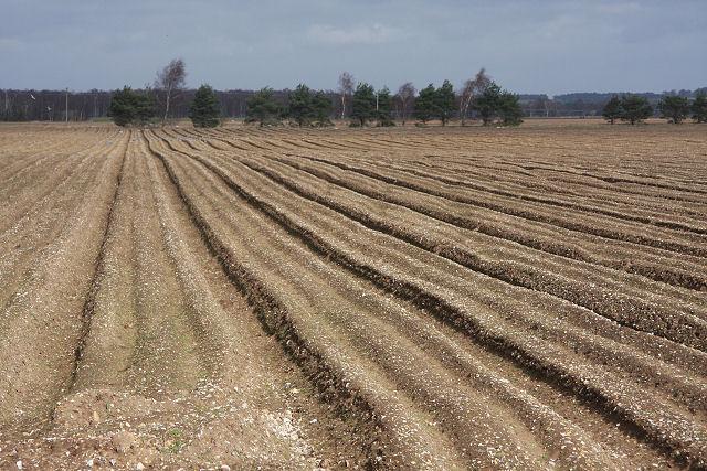 Ploughed field near Cavenham