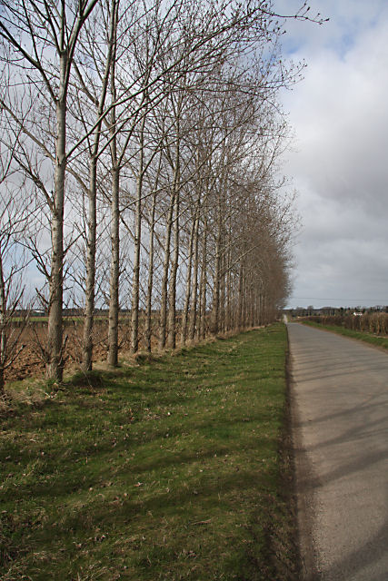 Tree-lined road near Risby