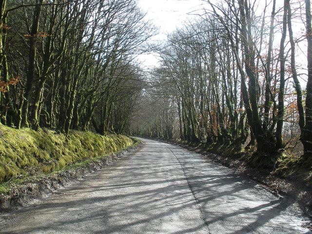 Tree-lined road through Melbury Plantation