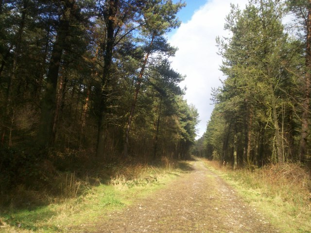 Forest Road on Farley Moor