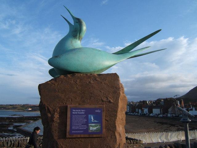 Arctic Tern Sculpture at the SeaBird Centre, North Berwick