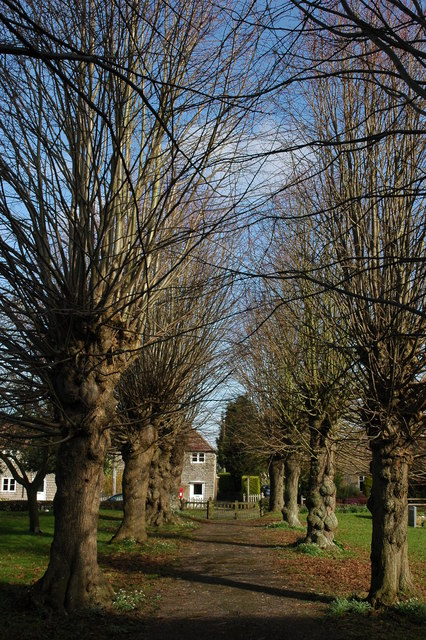 Trees in Hinton on the Green churchyard
