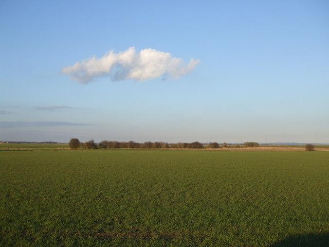 Fields of SE7720