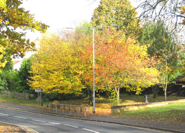 More autumn colour at Hanging Hill Lane