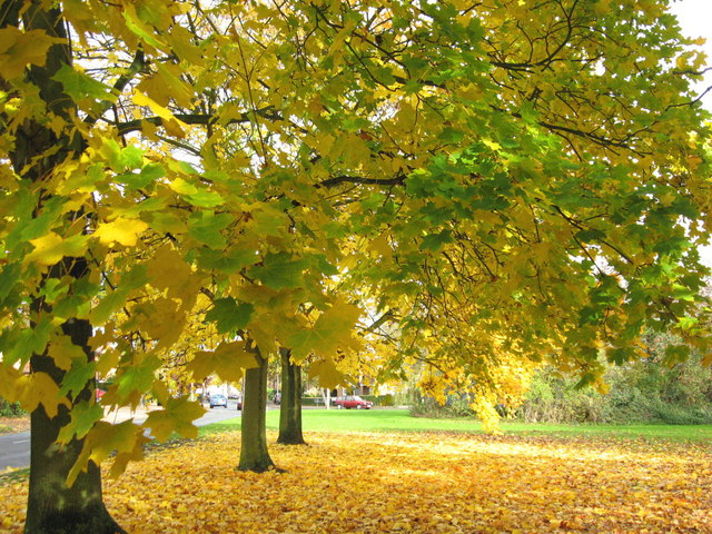 Autumn colour at Running Waters, Ingrave