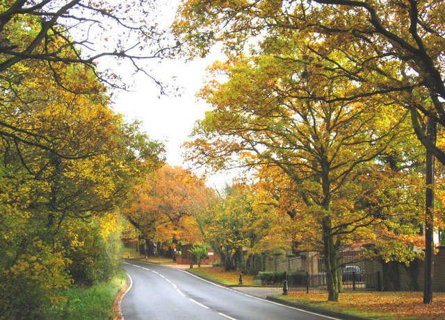 Autumn colour at Warley Hill, Great Warley