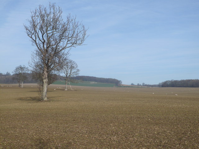 Looking north-east across Eastwell Park from the North Downs Way