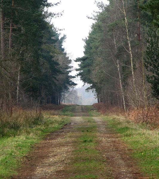 Main track through Hevingham Park