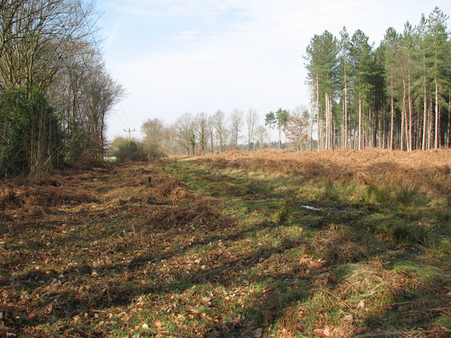 The southern edge of Hevingham Park