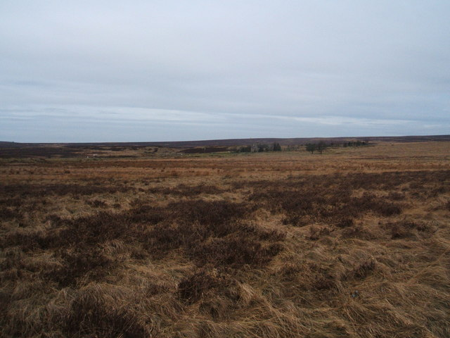 Moorland and its drab late winter colours