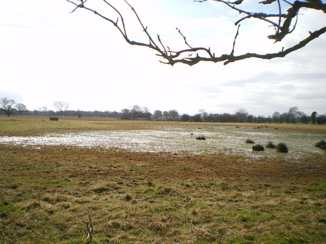 Marshland in the valley of the River Roden