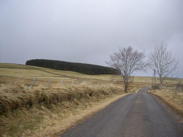 Plantation near Boghead/Drywells