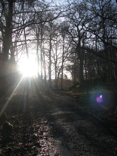 Roslin Glen path