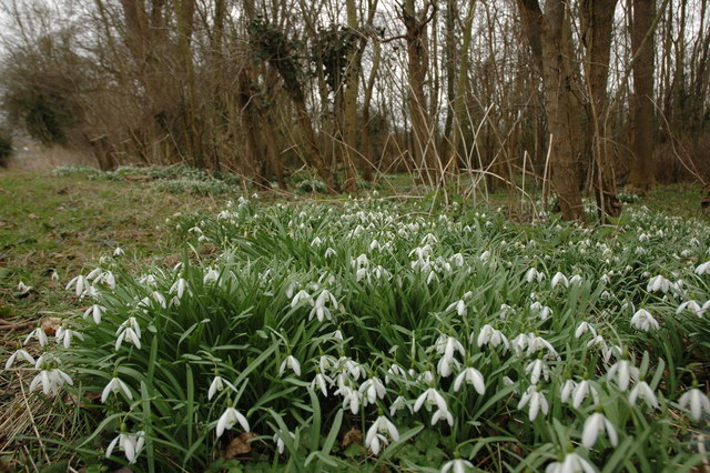 Snowdrops at Toddington