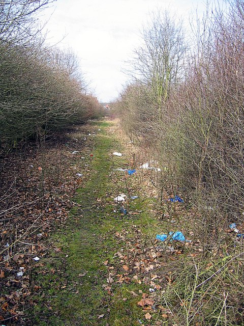Litter-strewn footpath in Hainault Forest