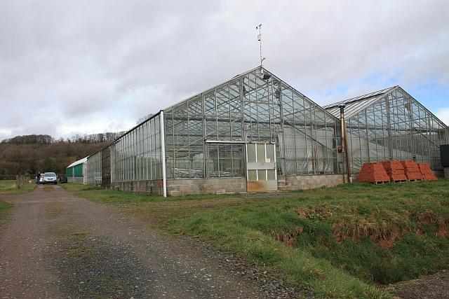 Glasshouses, Linnett farm, Ullingswick